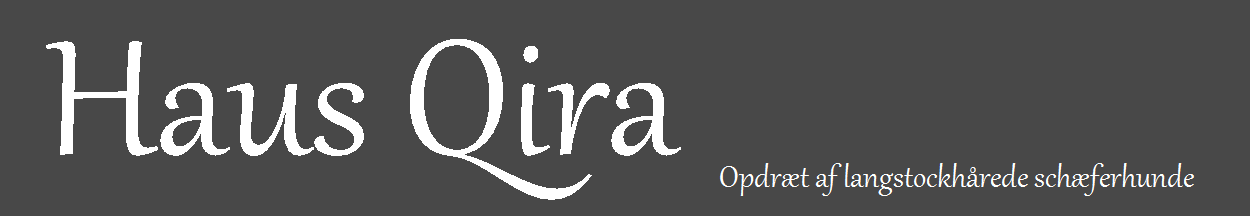 Haus Qira – Opdræt af langhårede schæferhunde i Frederiksværk