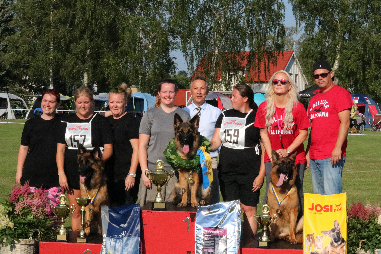 Utah vom Steinburgerhof er blevet siegerin til det Svenske Schæferhunde Mesterskabet SSM