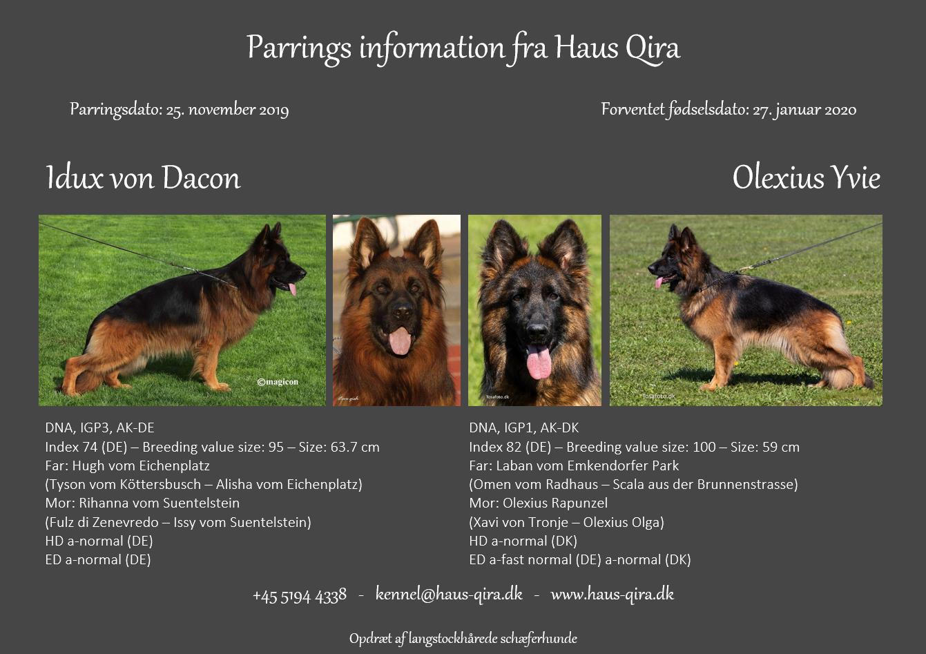 Yvie er blevet parret med Idux vom Dacon & vi har fået ny avlstæve hos Haus Qira!