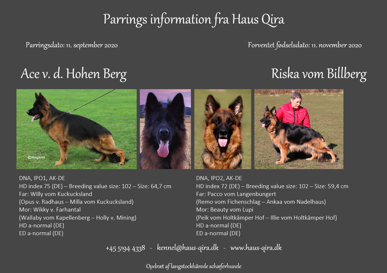Riska er i dag blevet parret med Ace v. d. Hohen Berg